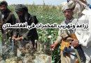 زراعة وتهريب المخدرات في أفغانستان