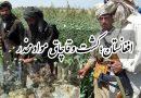 افغانستان؛ کشت و قاچاق مواد مخدر